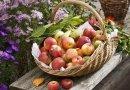 Сегодня Яблочный Спас: как провести день, чтобы год был удачным