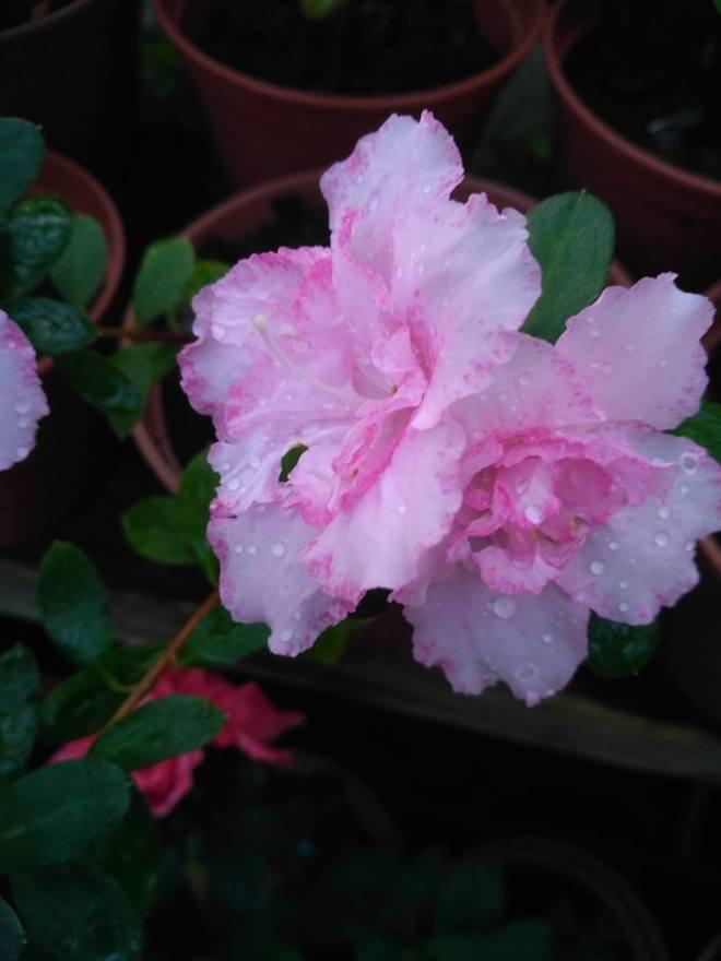 цвети1