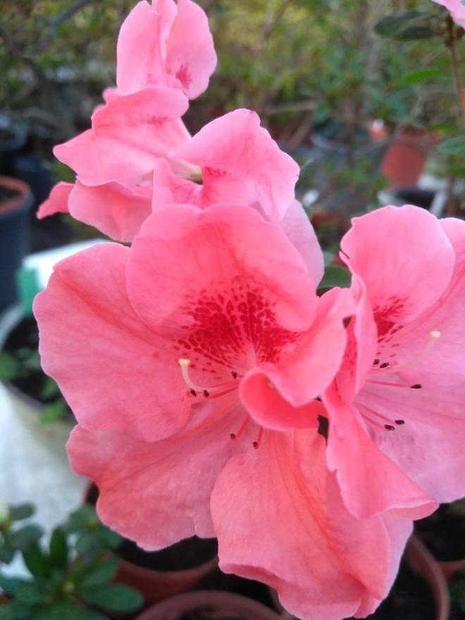 цвети2