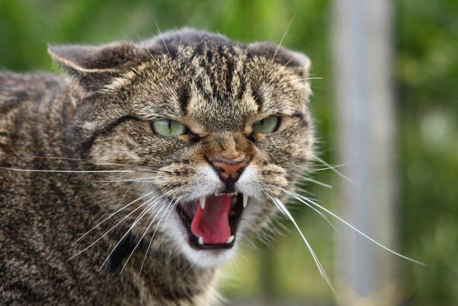 сказ_кішка