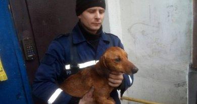 На Дніпропетровщині тварина потрапила в бетонну пастку (Фото)