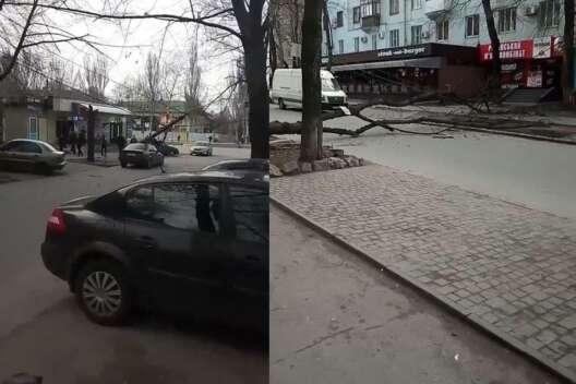 В Запорожье рухнувшее дерево завалило столб на ...