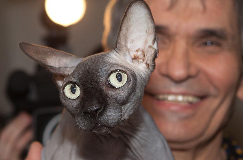 Бари Алибасову подсунули кота за 800 тысяч рублей