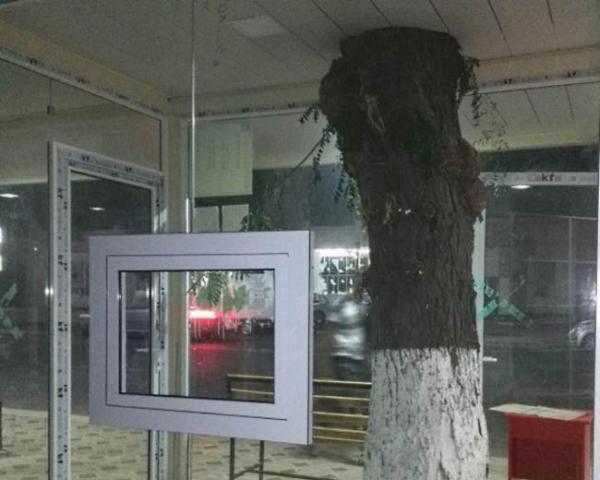 В Госкомэкологии обосновали массовую вырубку деревьев в Ташкенте