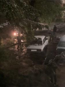 Опасно, деревья! – хокимият Ташкента предупреждает