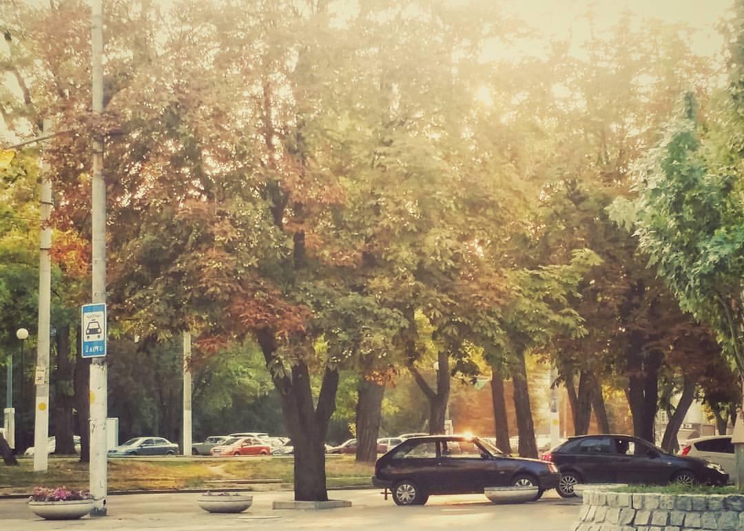 Листья желтые над городом кружатся?