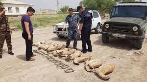 Местные жители ради рогов убили 11 джейранов в заповеднике «Устюрт»