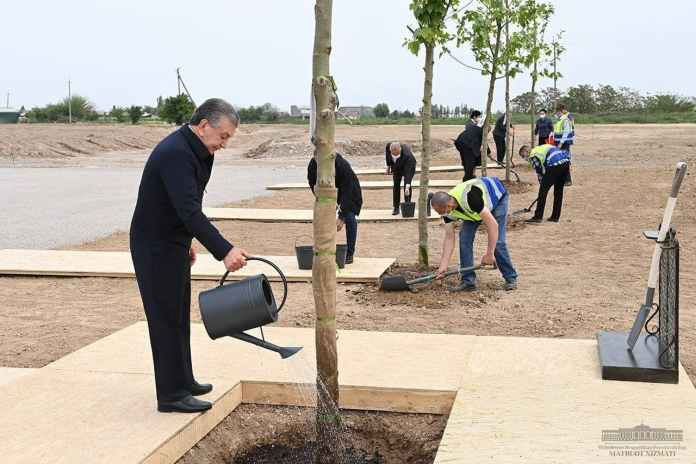 Как не погубить 250 миллионов деревьев