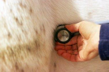 stetoskopaahestlogo
