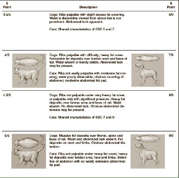 Body Condition Scoring Chart 2