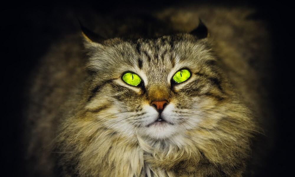 Kedi ve Köpeklerde Uveitis