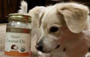 dog and coconut oil