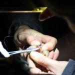 3 points de suture pour Voyou (©AS Hourdeaux/Croix du Nord)