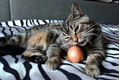 кот ест лук