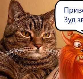 зуд-у-кошек