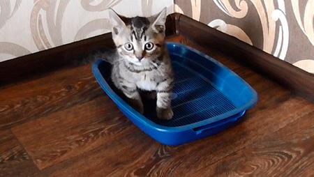 котенок в туалете