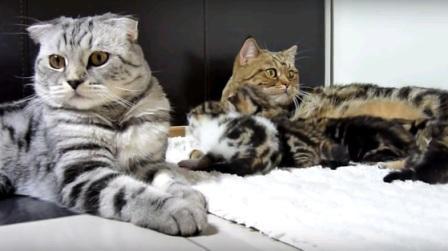 котята с кошкой