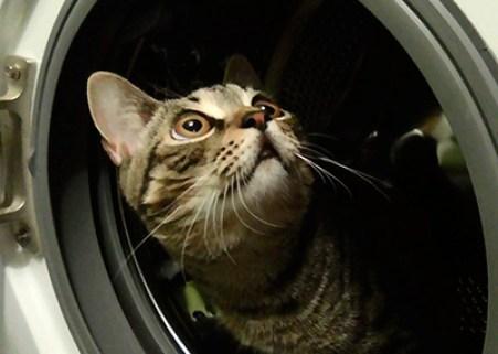 Кот в стиральной машинке