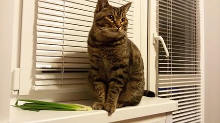 зеленый лук ест кот