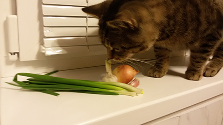 кот ест чеснок