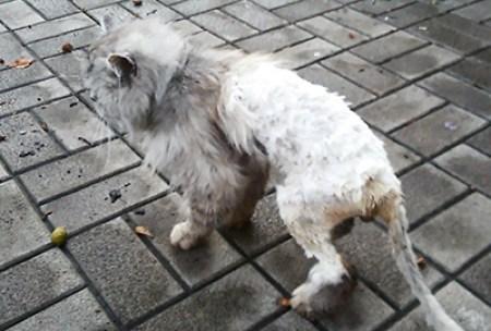 кота подстригли