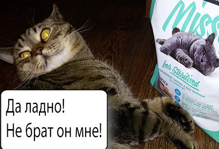 кот и корм