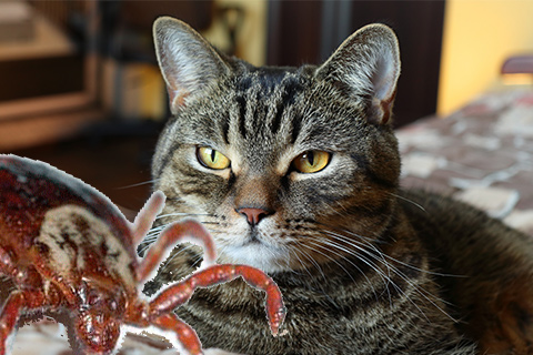 клещи и кот
