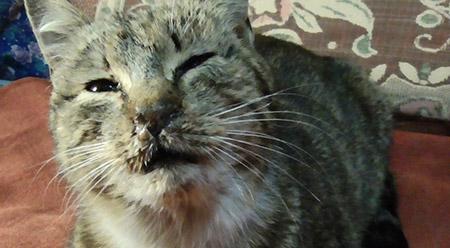 Текут сопли с носа у кота