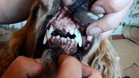 собака без зубов