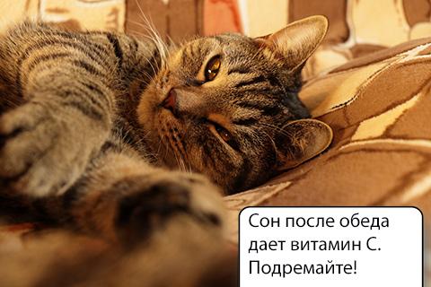 кот дремает