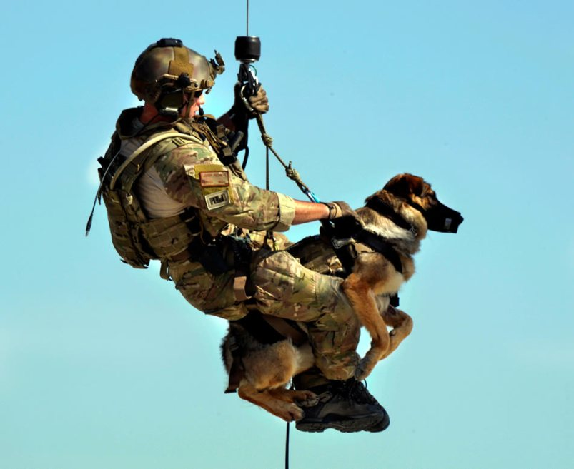 explosive-detection-dog-07-2013