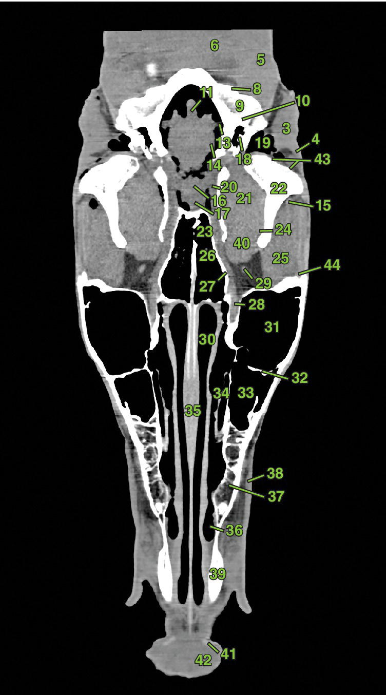 3 Radiographs displaying dorsal section 1 of an equine head depicting the bones of the head, nasal and sinus structures, ophthalmic structures, auricular structures, brain and nervous system, muscles, etc.