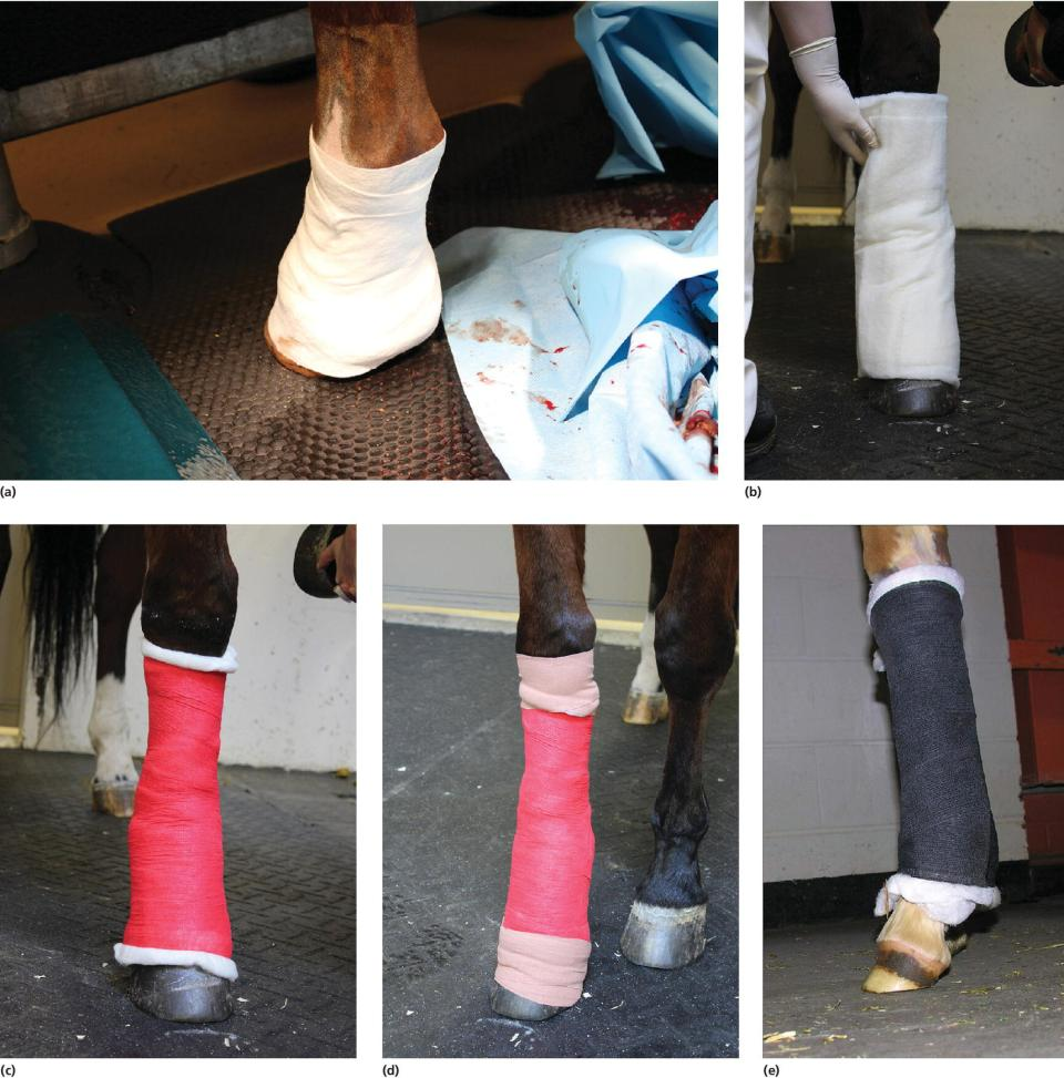 Photos of the first step in creating distal limb bandage on the wound (a), cotton padding applied (b), tertiary layer with self-adhesive material used (c,d), and bandage used to cover wound over cannon bone (e).