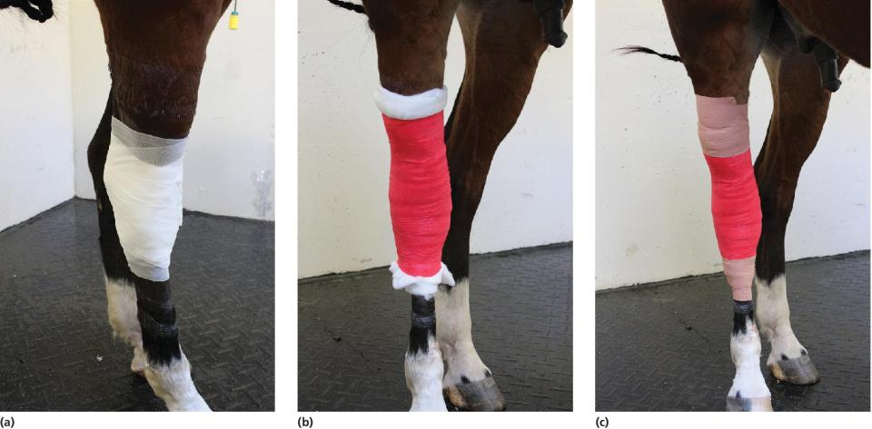 3 Photos displaying the progression of bandage placement over the hock.