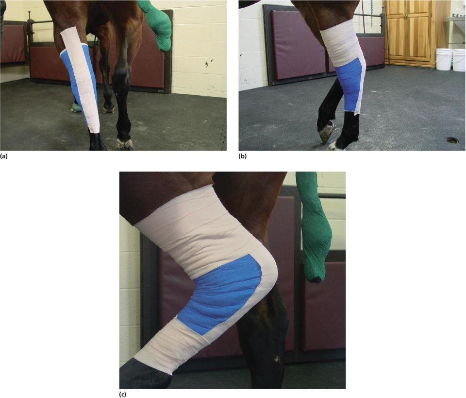3 Photos displaying a strip of adhesive tape on the plantar surface of the hock, strip of Elastikon® held in place at its proximal limit, and the proximal and distal limits of the strip secured with the same tape.