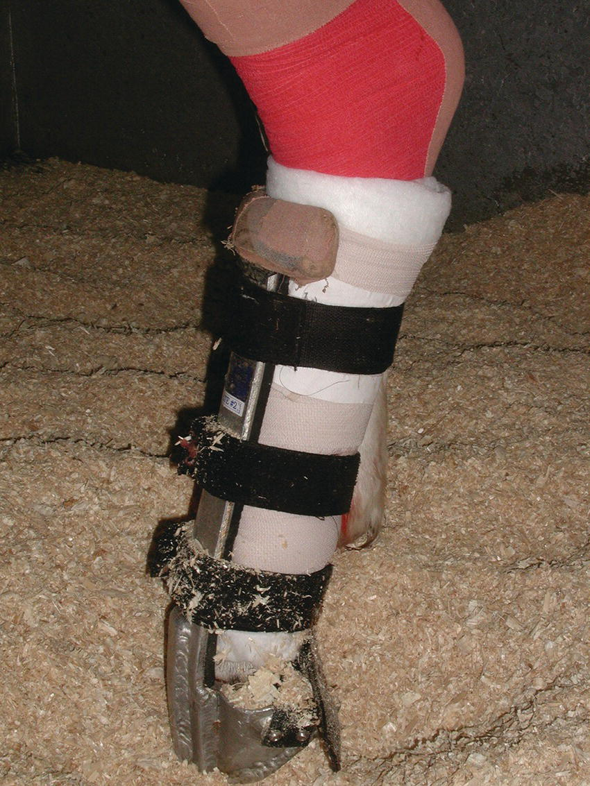 Photo displaying Kimzeg Leg Saver Splint applied to the hindlimb of a horse.