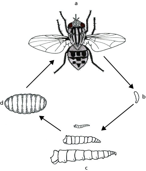 Arthropods Part 1 Introduction And Insects