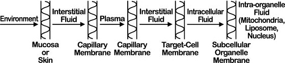 Diagram shows environment leading to interstitial fluid leading to plasma to intracellular fluid finally to intra-organelle fluid.