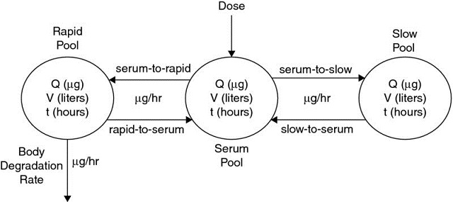 Diagram shows thyroid hormone metabolism having rapid pool with dose leading to slow pool leading to body degradation rate.