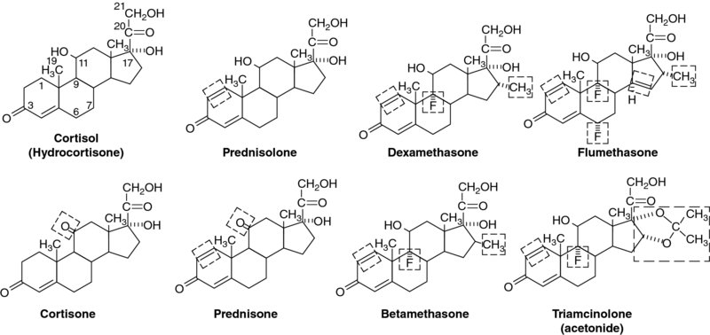 Diagram shows chemical compound structure of cortisol, prednisolone, dexamethasone, flumethasone, cortisone, et cetera.