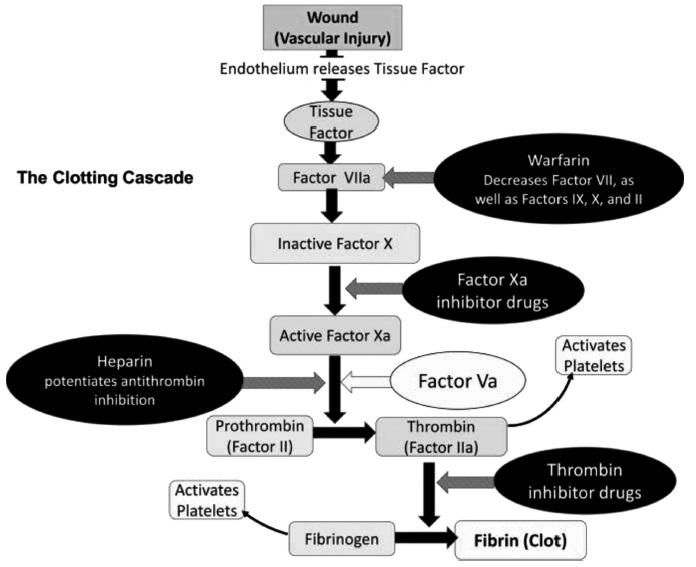Diagram shows sequence of events like wound to tissue factor, factor vila, inactive factor X, active factor Xa, prothrombin, thrombin, fibrinogen, et cetera.