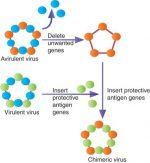 Recombinant vectored vaccines