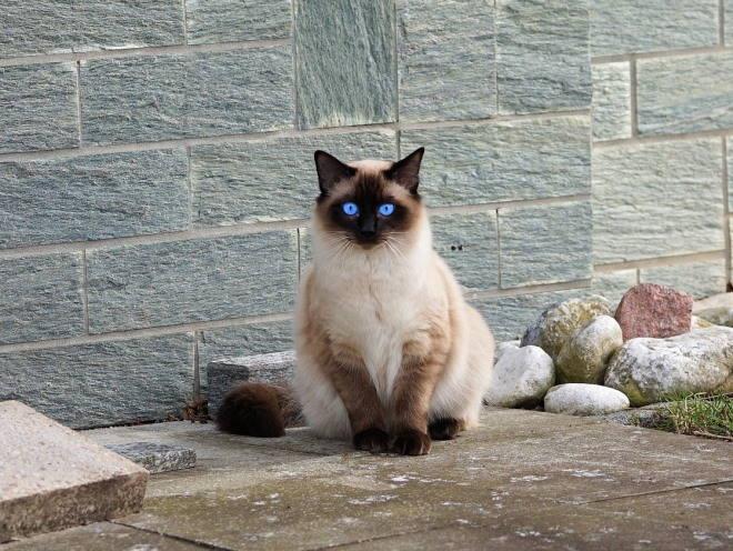 У кота кашель и хрипы чем лечить