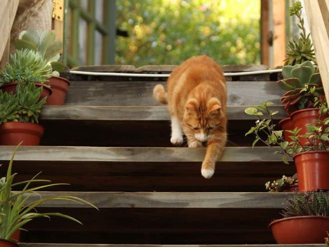 Ушивание грыжи у кошки. Грыжи у кошки. Что скрывается за жутким диагнозом. Как осуществляется лечение пупочной грыжи