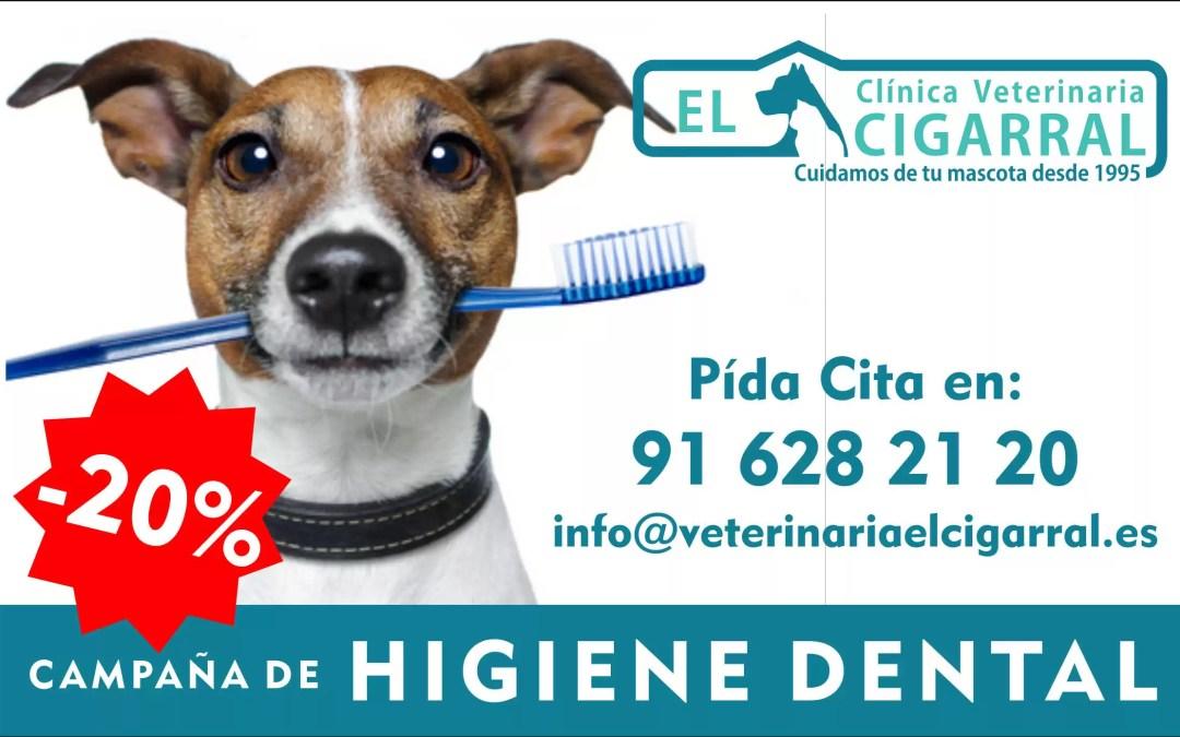 Campaña de Higiene Dental para tu Mascota.