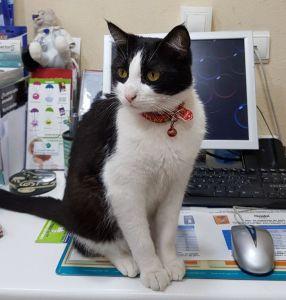 Yang-gato-mascota-veterinaria-la-florida-alicante