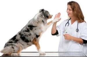 Good things to say about Vet Care Foundation