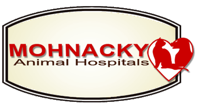 Mohnacky Animal Hospitals