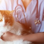 veterinary inventory management