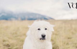 veterinary inventory webinar